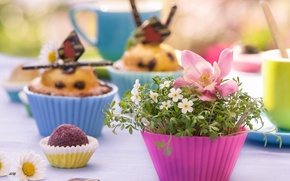 Picture flowers, cupcakes, molds, muffins