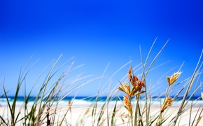 Wallpaper grass, Beach, horizon