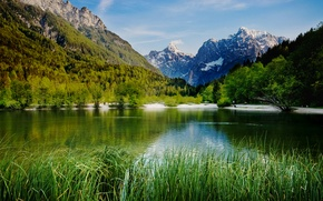 Picture forest, trees, mountains, lake, the reeds, rocks, Slovenia, Lake Jasna