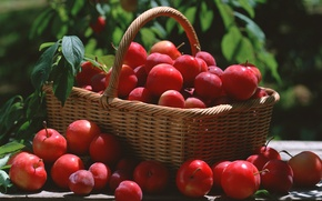 Picture leaves, basket, red, plum
