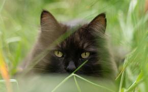Picture cat, summer, cat, face