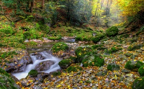 Picture autumn, forest, leaves, stream, forest, Nature, falling leaves, water, autumn, leaves, fall