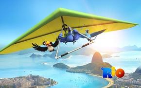 Picture birds, cartoon, Rio