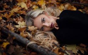 Picture autumn, look, leaves, sponge, Jesse Duke, Keil.