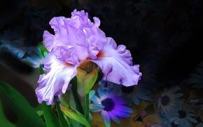 Picture flower, macro, line, paint, petals, iris