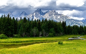 Picture forest, trees, mountains, nature, stream, river, Grand Teton National Park