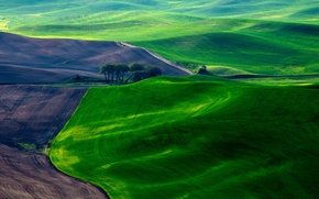 Wallpaper field, grass, earth, field, spring, carpets