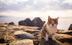 Wallpaper cat, look, summer