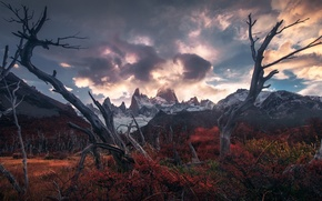 Picture clouds, mountains, thickets, the bushes, Andes, driftwood, Patagonia, Wallpaper from lolita777