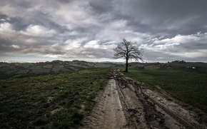 Picture road, field, tree