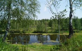 Picture forest, nature, river