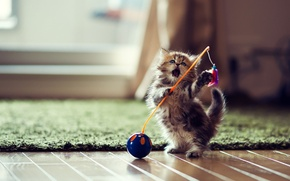 Picture toy, the game, kitty