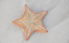 Picture sand, macro, starfish