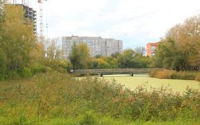 Picture bridge, River, reed, duckweed