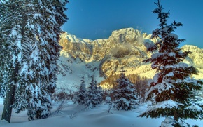 Picture winter, snow, trees, mountains, nature, spruce, Austria, Alps