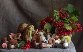 Picture berries, mushrooms, autumn, Kalina