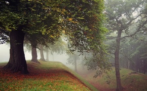 Picture autumn, grass, leaves, trees, fog, Park