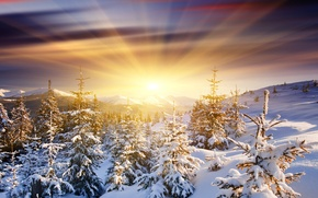 Picture the sun, snow, mountains, dawn, tree