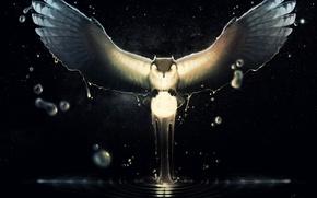 Picture look, light, the moon, stars, Owl, stroke, Gaudi Buendia