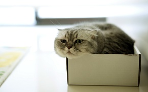 Picture cat, house, box