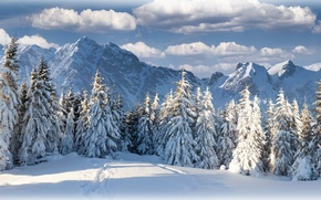 Picture winter, forest, the sky, clouds, mountains, nature, beautiful