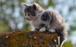 Picture cat, nature, background