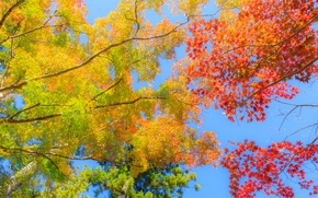Picture autumn, the sky, leaves, trees, branches, the crimson