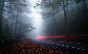 Wallpaper road, forest, light, nature, fog, the evening, excerpt, haze