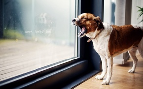 Wallpaper house, dog, yawn