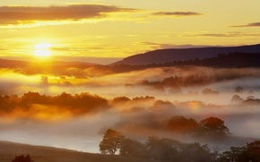 Wallpaper sunrise, fog, the sun, forest, nature