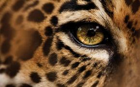 Picture eyes, macro, leopard