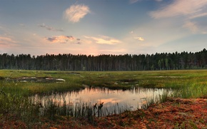 Picture forest, grass, clouds, reflection, lake