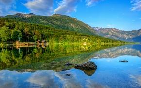 Picture forest, landscape, mountains, lake, reflection, forest, mountain, lake, Slovenia, Bohinj
