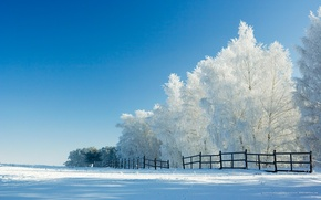 Wallpaper winter, snow, trees, the fence