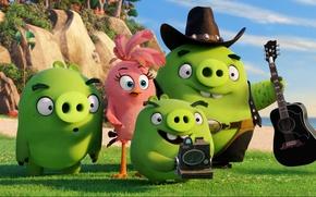 Picture cinema, animation, guitar, grass, game, beach, bird, rocks, sand, cartoon, movie, series, film, Angry Birds, …