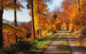 Wallpaper road, autumn, forest, leaves, trees, mountains, yellow, Sunny, gold