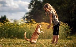 Picture cat, cat, friendship, girl, friends