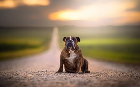 Picture road, dog, space