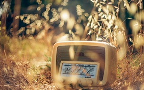 Picture grass, macro, radio