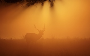 Wallpaper night, fog, deer