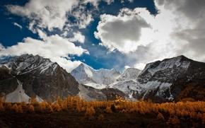 Picture autumn, trees, trees, autumn, mountain range, Mountain range