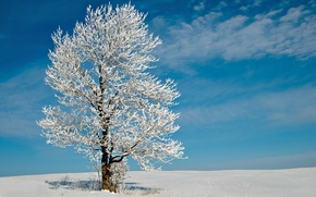 Picture winter, field, the sky, clouds, snow, Tree, frost, lonely tree, Sunny day, snow, tree, lonely …