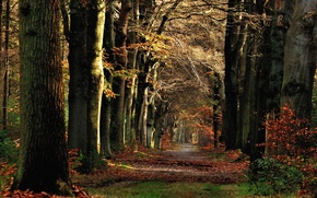 Picture Autumn, Forest, Trail, Fall, Track, Autumn, November, November, Path