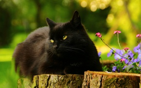 Picture greens, cat, summer, cat, look, flowers, nature, pose, background, tree, black, portrait, garden, lies, pink, ...