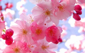 Picture freshness, tenderness, color, Spring