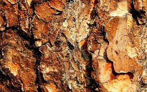 Picture bark, pine, resin