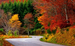 Picture road, autumn, forest, leaves, trees, nature, colors, colorful, forest, road, trees, nature, autumn, leaves, walk, …