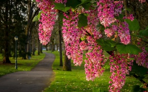 Picture Park, branch, track, flowering, flowers, inflorescence