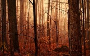 Picture drops, nature, moisture, after the rain, haze, autumn forest