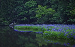 Picture grass, water, trees, flowers, nature, Park, reflection, green, green, grass, trees, nature, water, park, flowers, ...